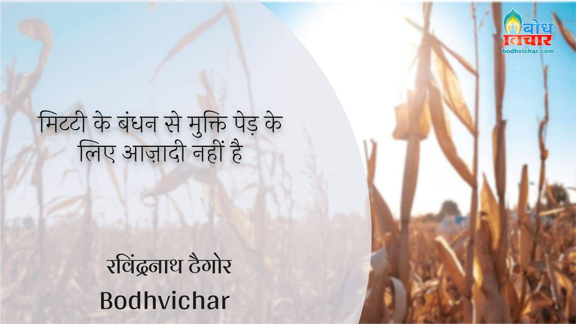 मिटटी के बंधन से मुक्ति पेड़ के लिए आज़ादी नहीं है : Mitti ke badhan se mukti ped ke liye aazadi nahi hai - रवीन्द्रनाथ टैगोर